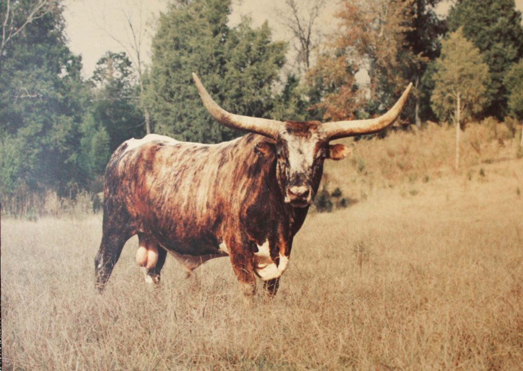 The Bull Of Bullhill